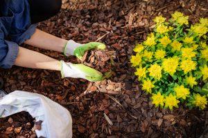 How to mulch your yard - gardener mulching flower bed with pine tree bark mulch