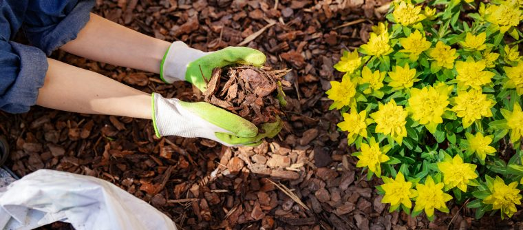 How to mulch your yard - gardener mulching flower bed with pine tree bark mulch