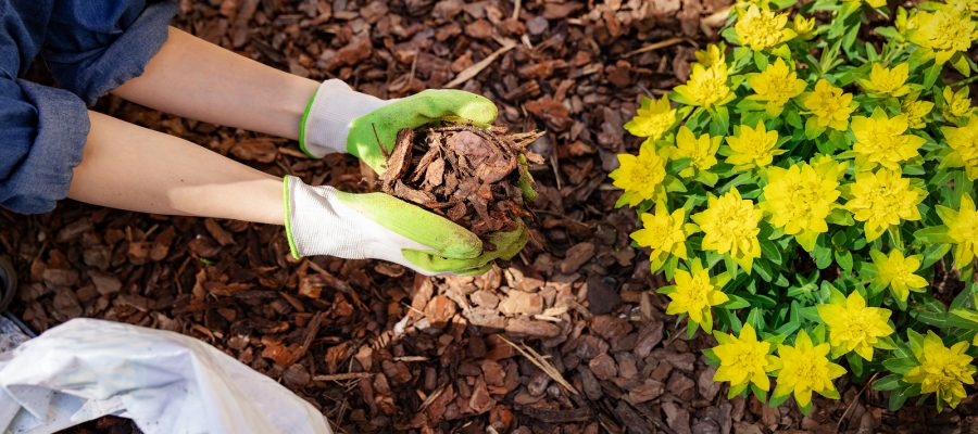 How to Mulch Your West Houston Yard