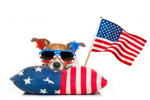 Fireworks July 4th 2019 Houston jack russell dog celebrating 4th of july independence day holidays with american flag and sunglasses isolated on white background