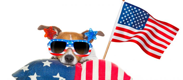 jack russell dog celebrating 4th of july independence day holidays with american flag and sunglasses isolated on white background